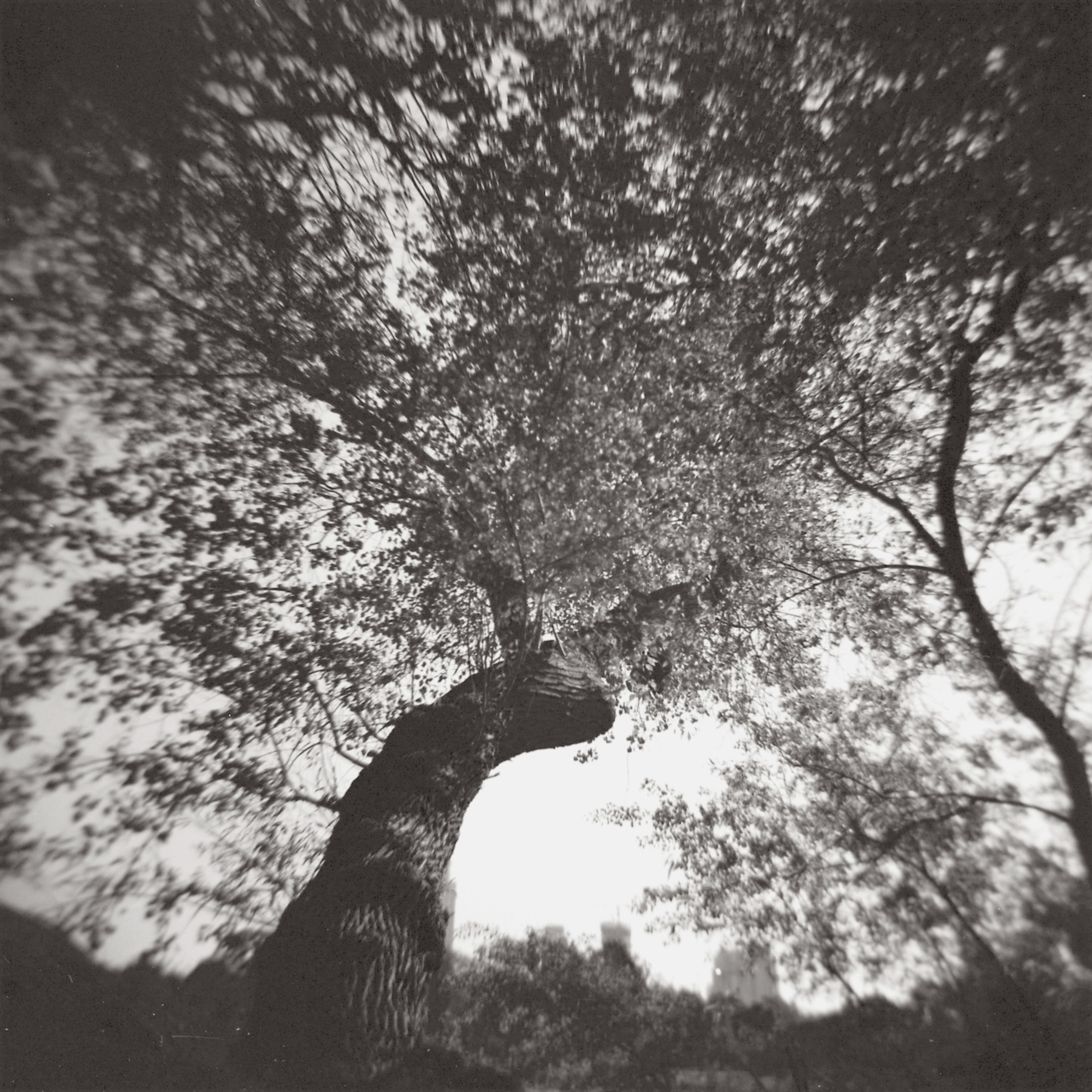 Foliage | Holga 120N | Daphne Schnitzer