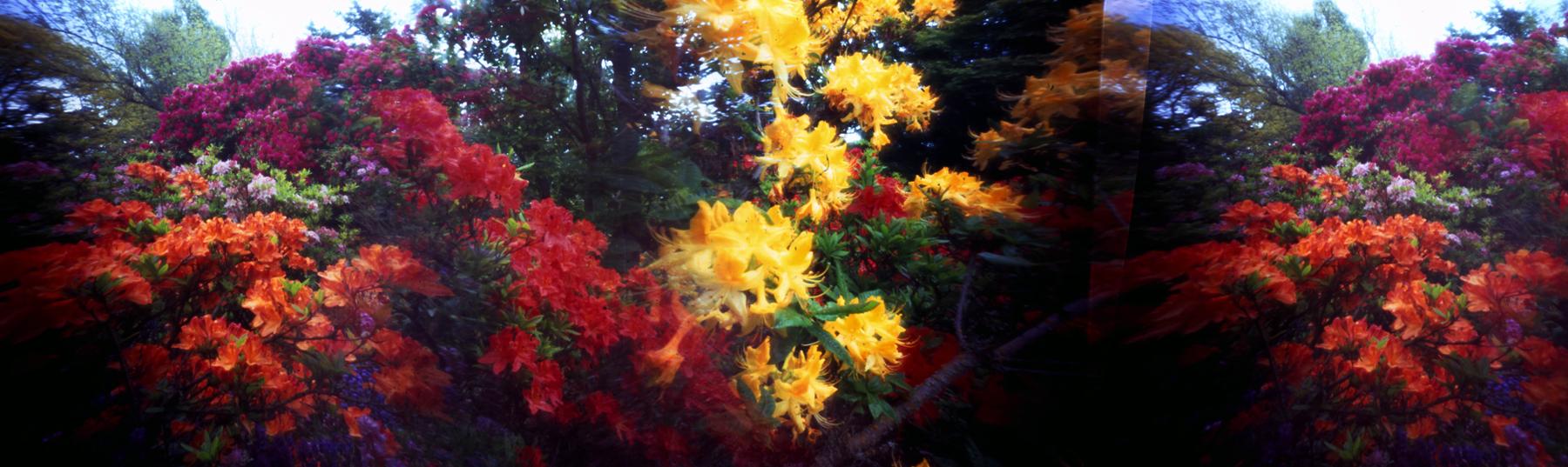 Bob St.Cyr | Cross-Pollination Pinhole-Blender