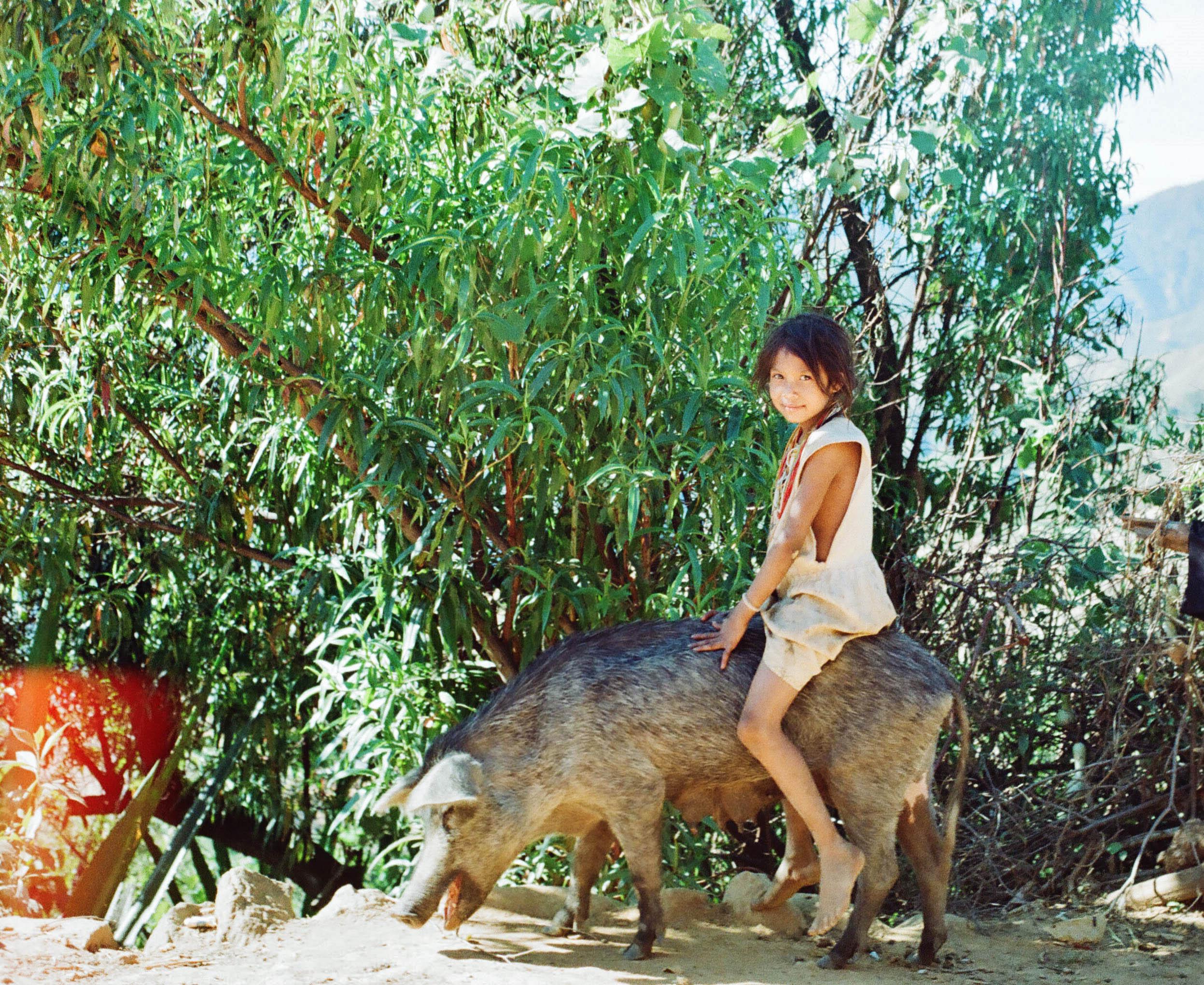 Jinga y puerca negra / Arhuaco girl, from Sierra Nevada de Santa Marta, riding a pig