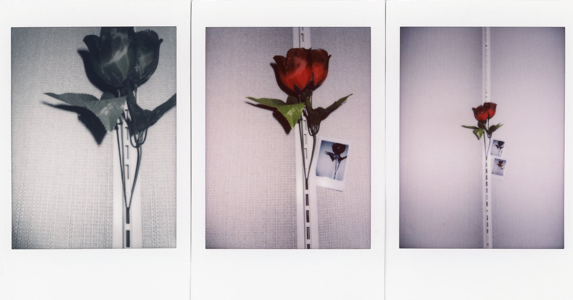 Artificial Flower | Instax Mini 70 | Daniel Stoessel