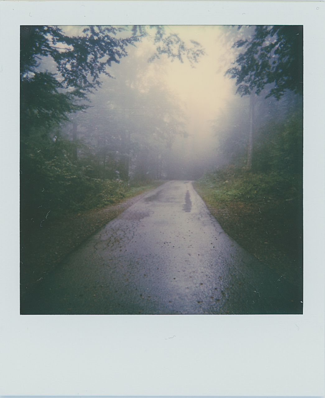 Foggy Road | Polaroid 600 | Josip Sore