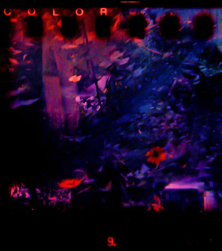 Color 9 | Bilora Bella | Lomography 400 f2 | Ruby Berry