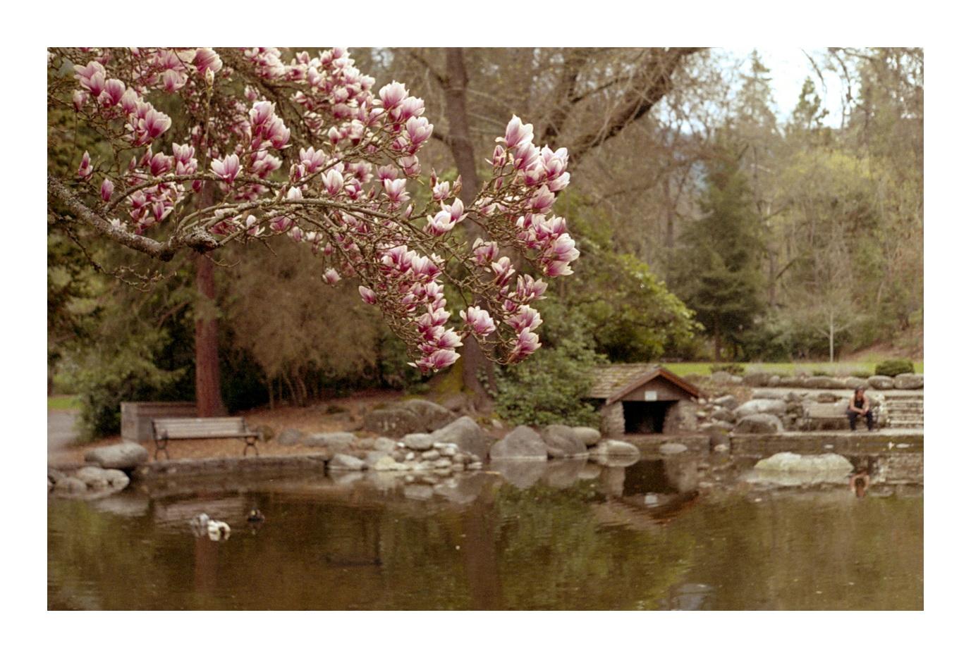 Shona Allen   Lithia Park