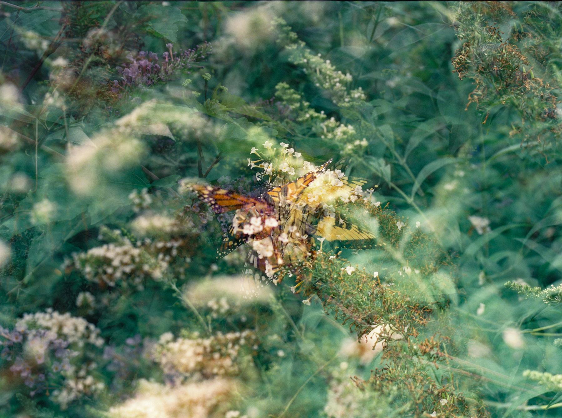 My Kaleidoscope   Pentax 645n   Cinestill 800   Deborah Candeub