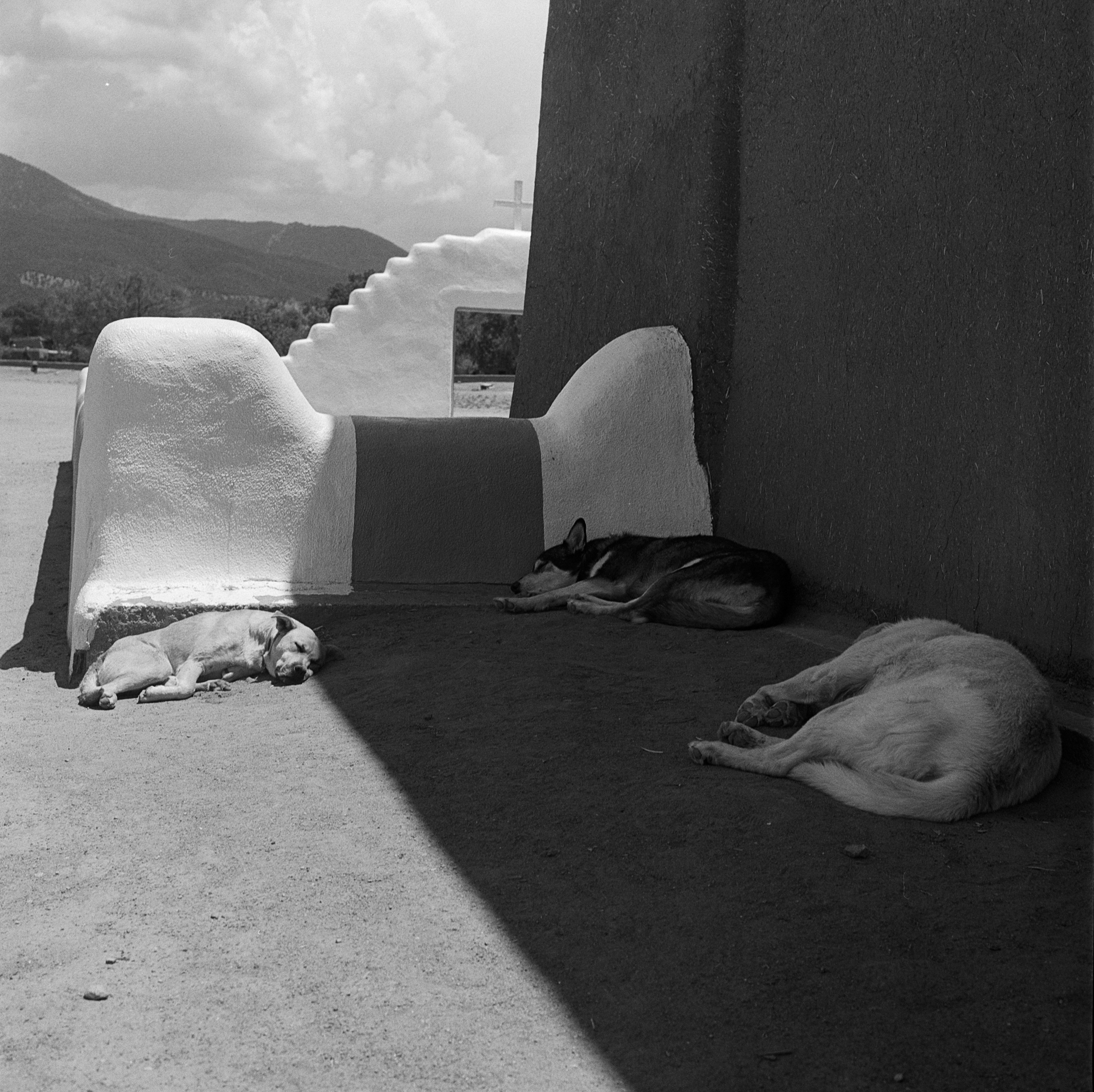 Taos Dogs   Hasselblad 500 cm   Tri-X   Amy Jasek