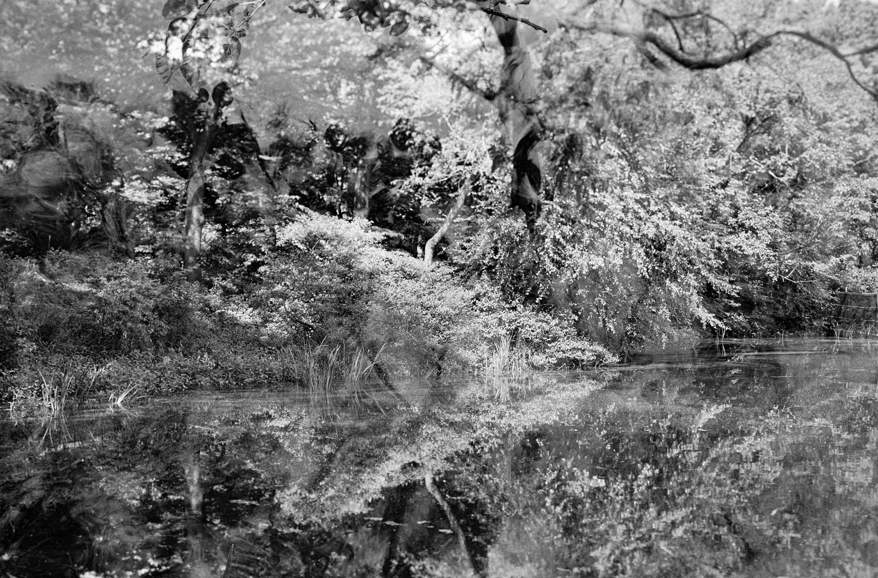 I quite like this unexpected double exposure, a result of my forgetting to wind the film on after a previous exposure.  Sinar Norma, Schneider Kreuznach 150mm f5.6 Symmar and Kodak Tri-X 400