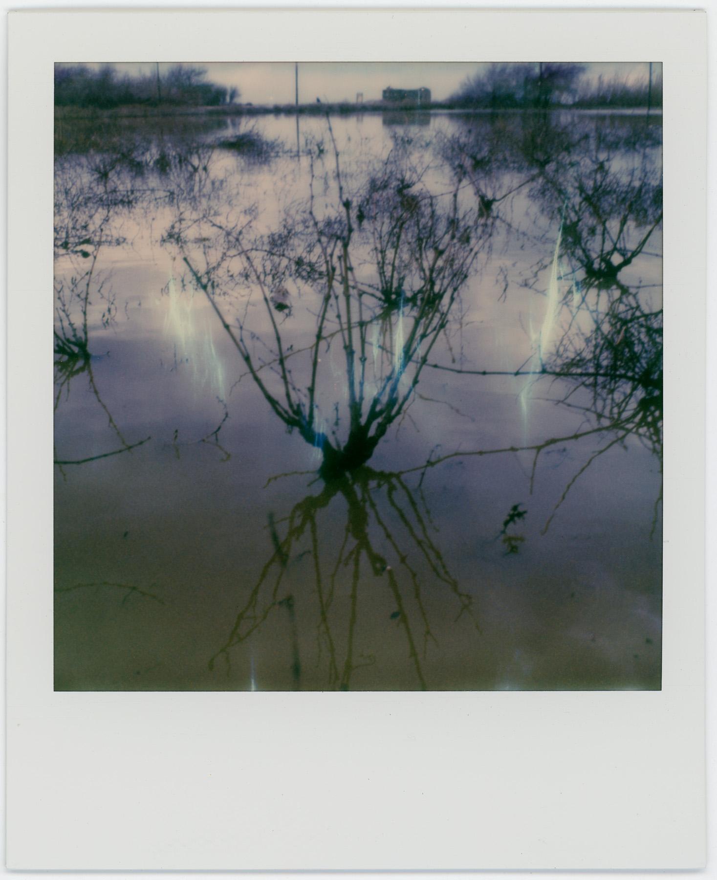 Flooded Vinyard | SLR 680 | Alek Lindus