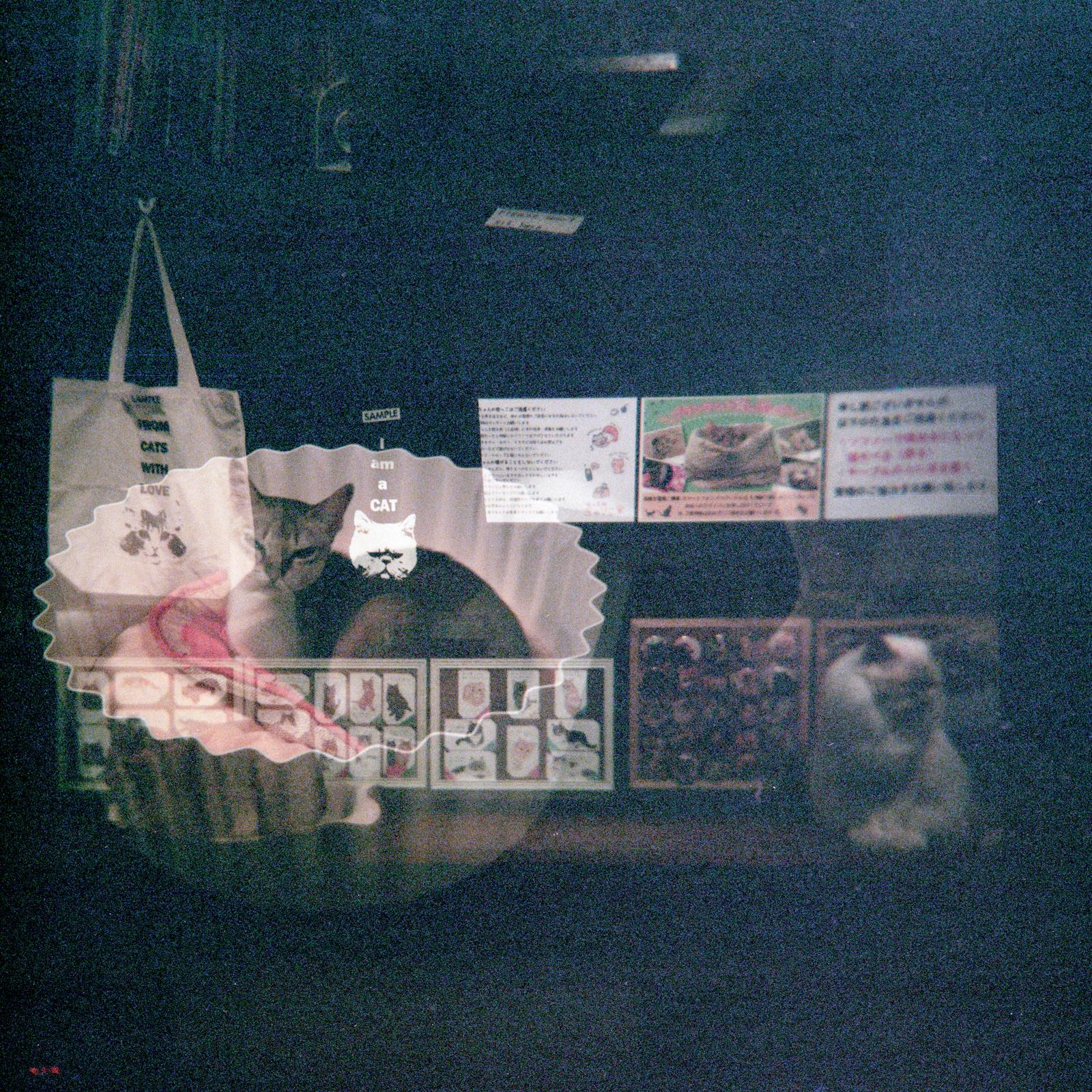 MyleskatherineJapan-11.jpg
