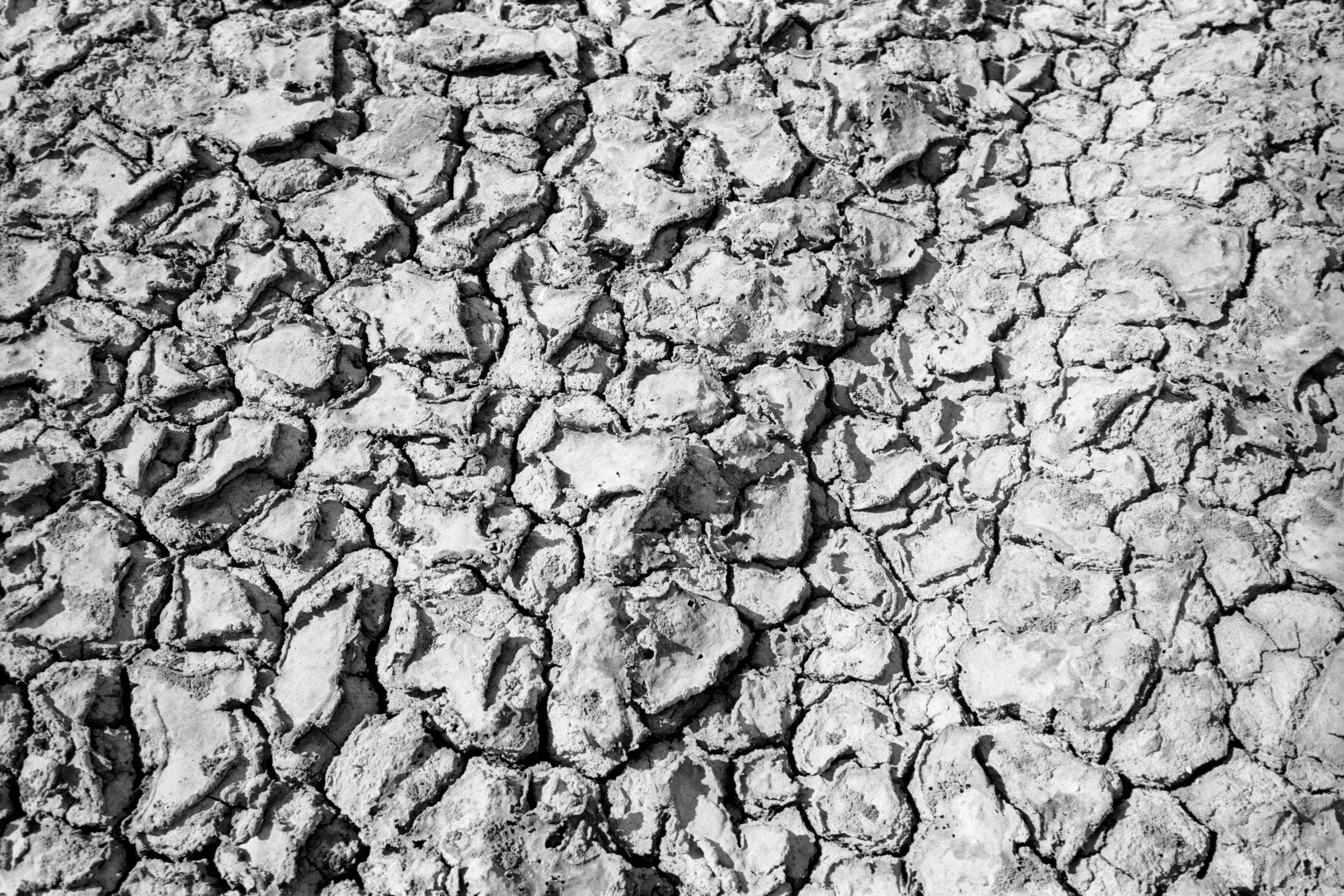 Textures of the ground beneath our feet. Kodak XX-5222, Leica M6 w/ 35mm f/2.5 (Elijah Clarke).