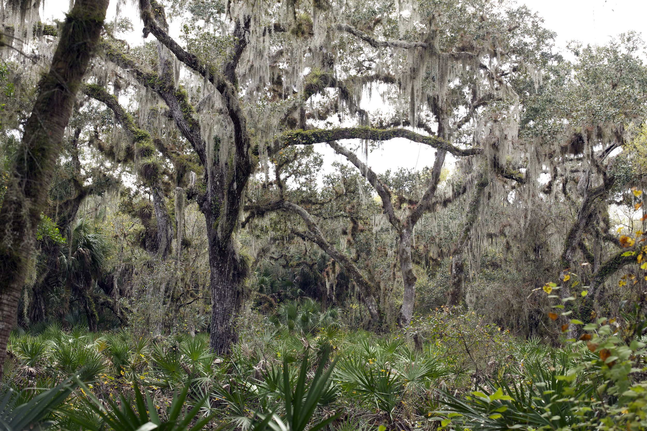 Myakka State Park, Florida L. A. Lewin 2013