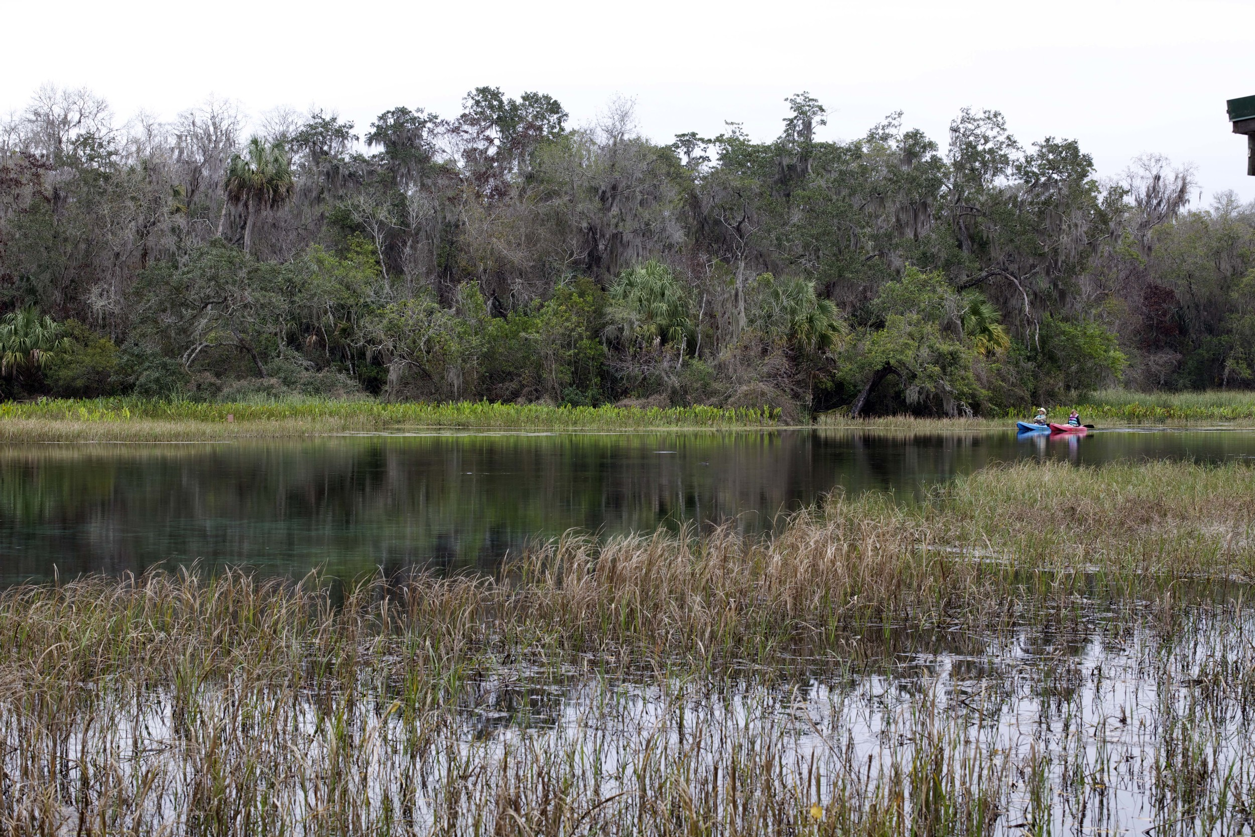 Rainbow River State Park, Florida L. A. Lewin 2013
