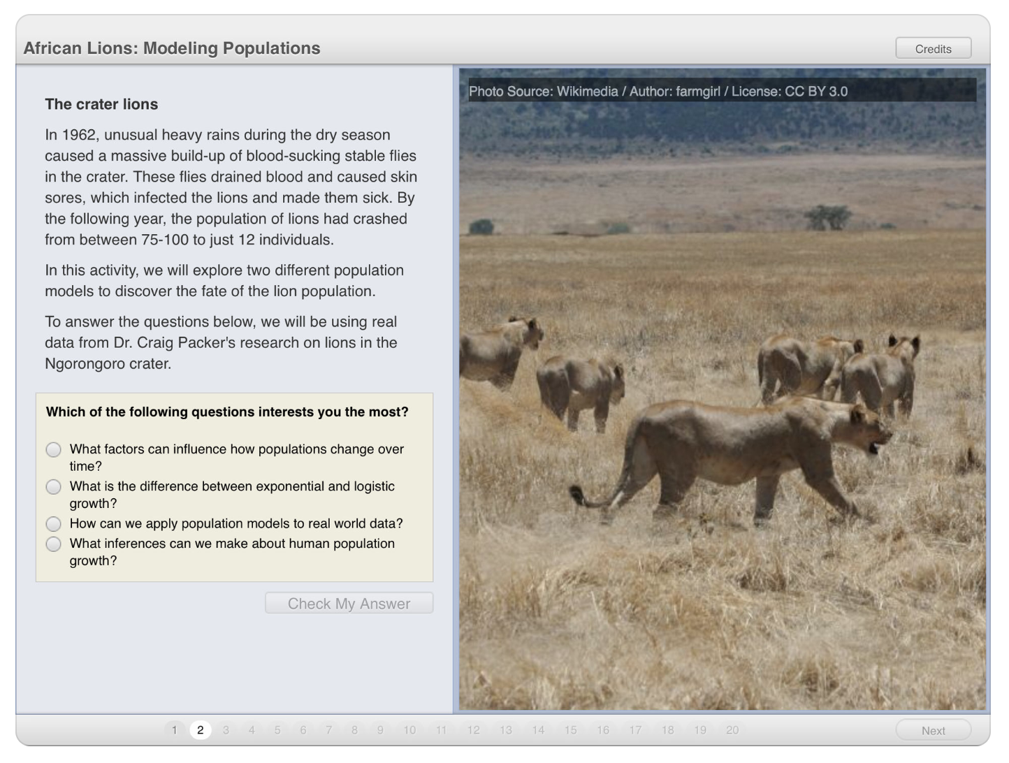 African Lions.png