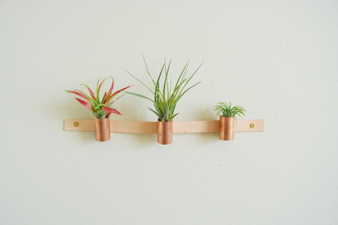 Copper and Leather Air Plant Holder.jpg