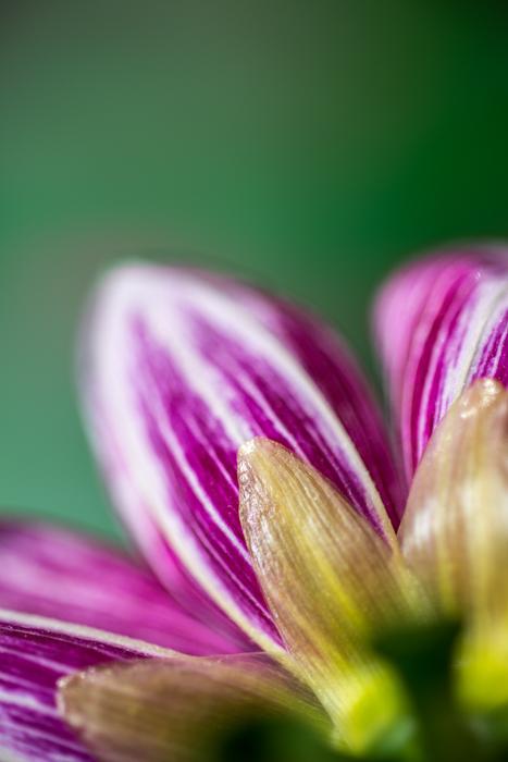 ann arbor dexter photographer flower floral garden gardens-4.jpg
