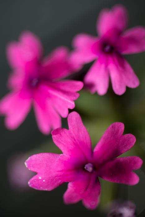 ann arbor dexter photographer flower floral garden gardens-10.jpg