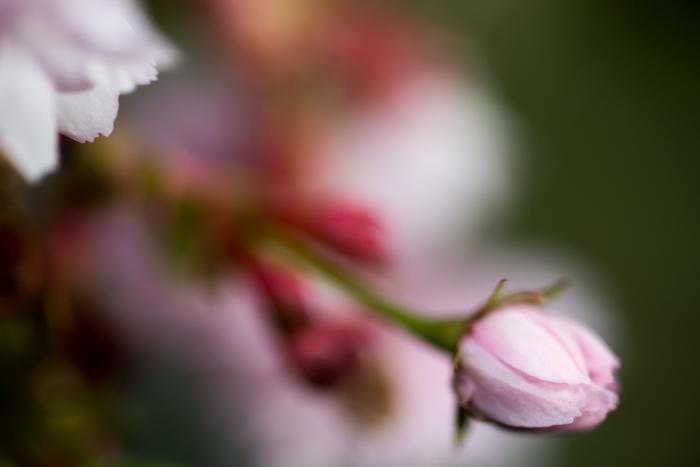 ann arbor dexter photographer flower floral garden gardens-11.jpg