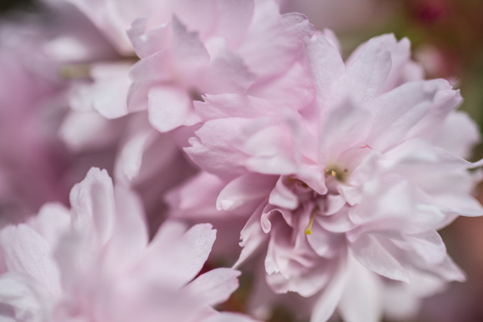 ann arbor dexter photographer flower floral garden gardens-12.jpg