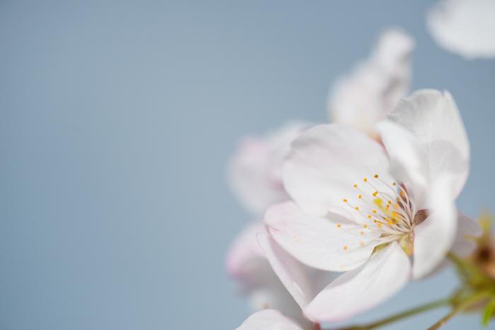 ann arbor dexter photographer flower floral garden gardens-14.jpg