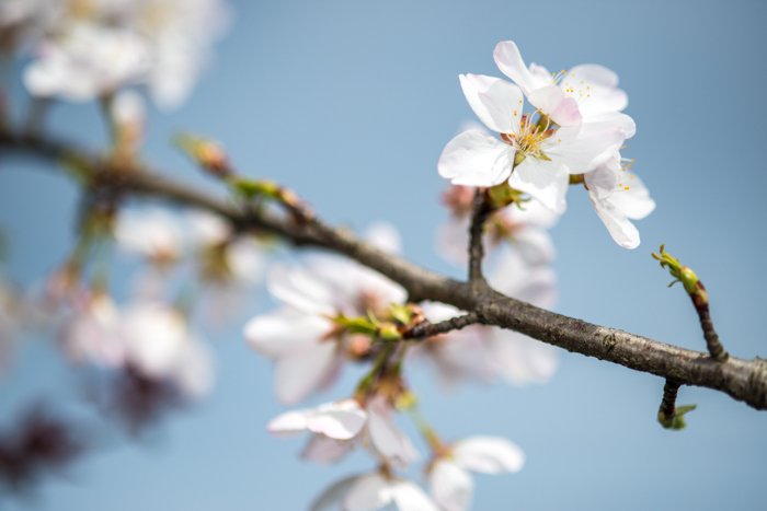 ann arbor dexter photographer flower floral garden gardens-15.jpg