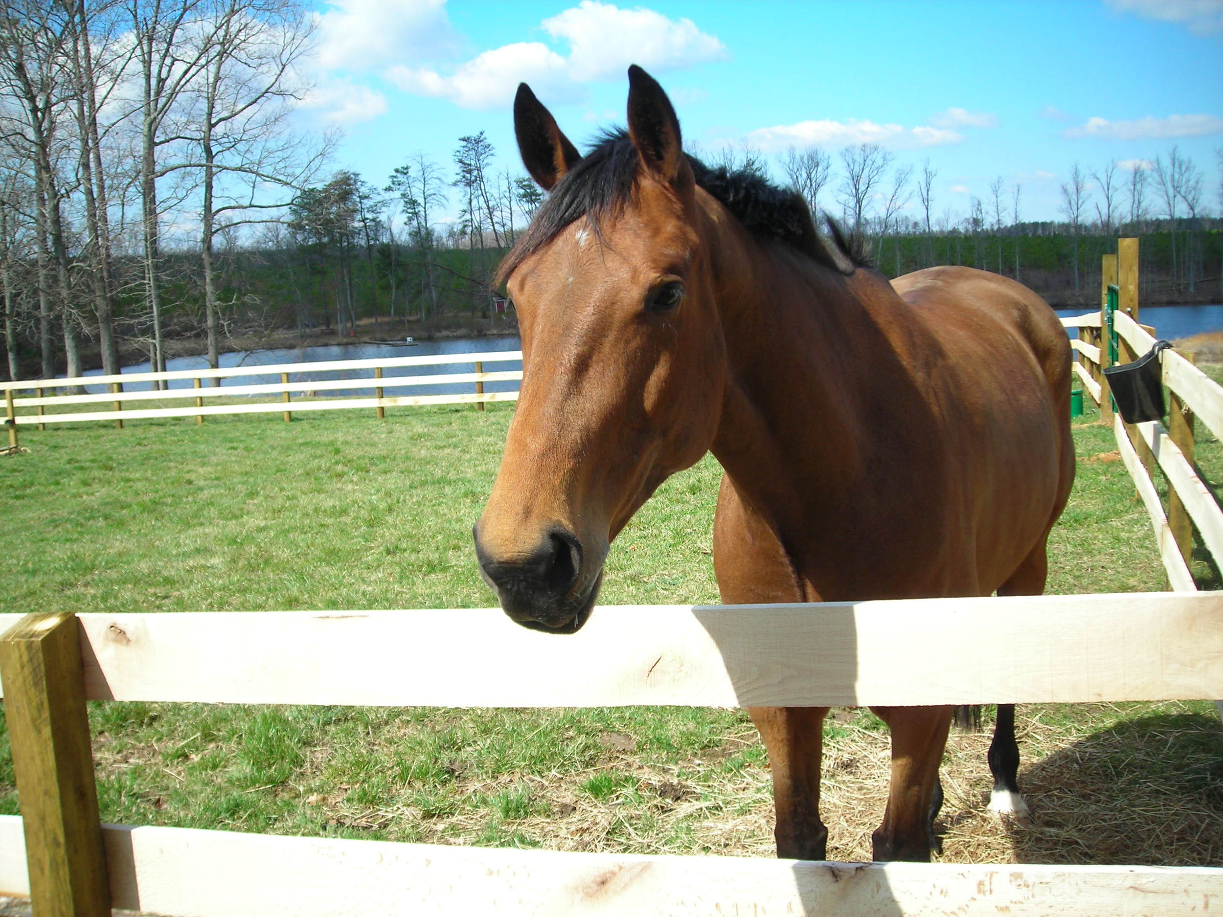lay-up horse in small paddock turnout
