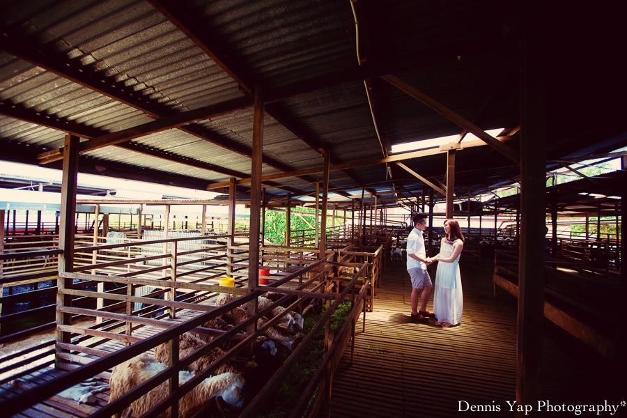 yong bin lidya with you eternally pre wedding uk farm johor kluang dennis yap photography lavendar farm goat farm-1.jpg
