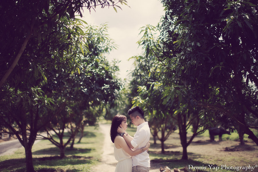 yong bin lidya with you eternally pre wedding uk farm johor kluang dennis yap photography lavendar farm goat farm-4.jpg