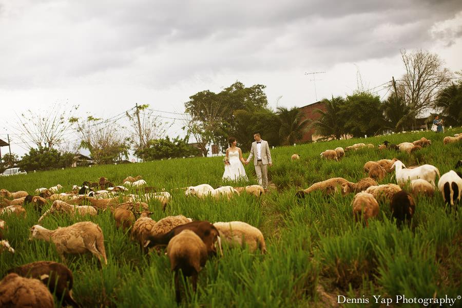 yong bin lidya with you eternally pre wedding uk farm johor kluang dennis yap photography lavendar farm goat farm-10.jpg