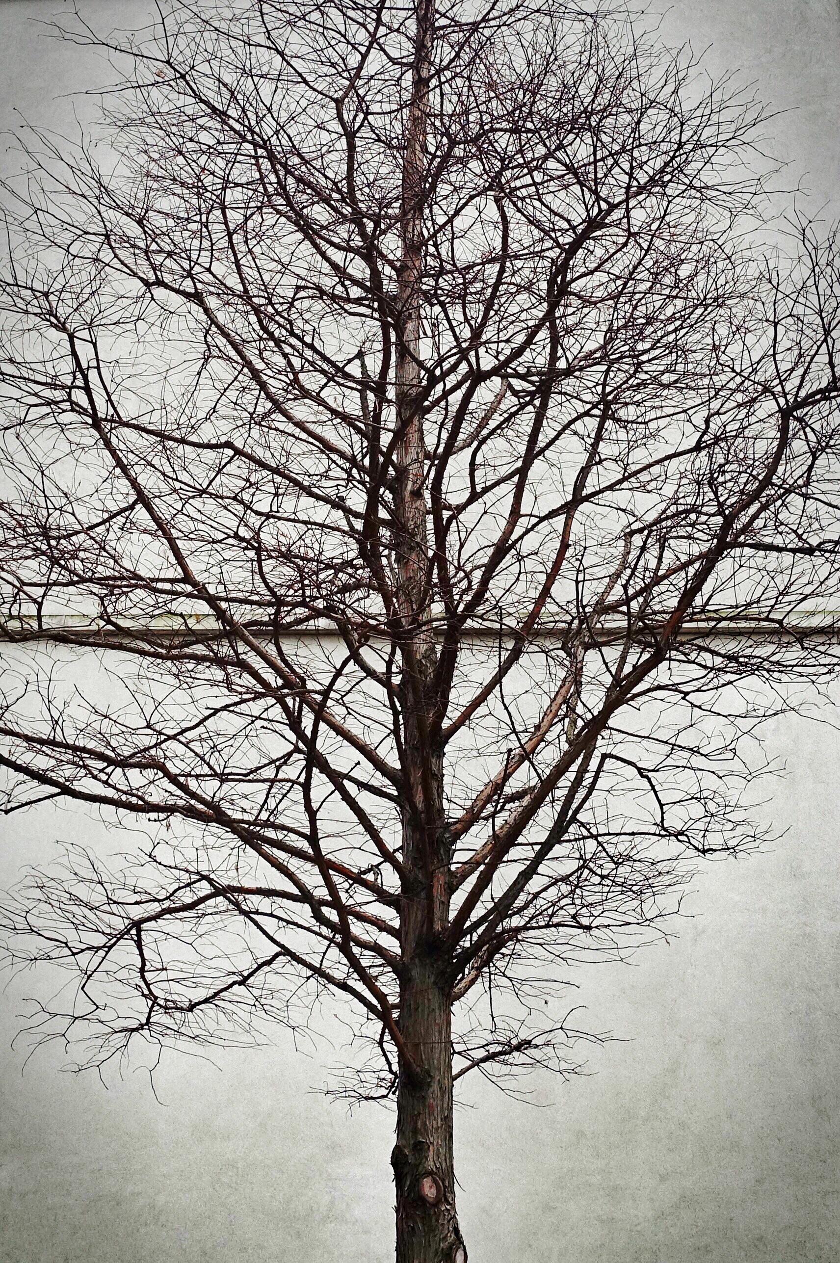 Day 43. Tree.jpg