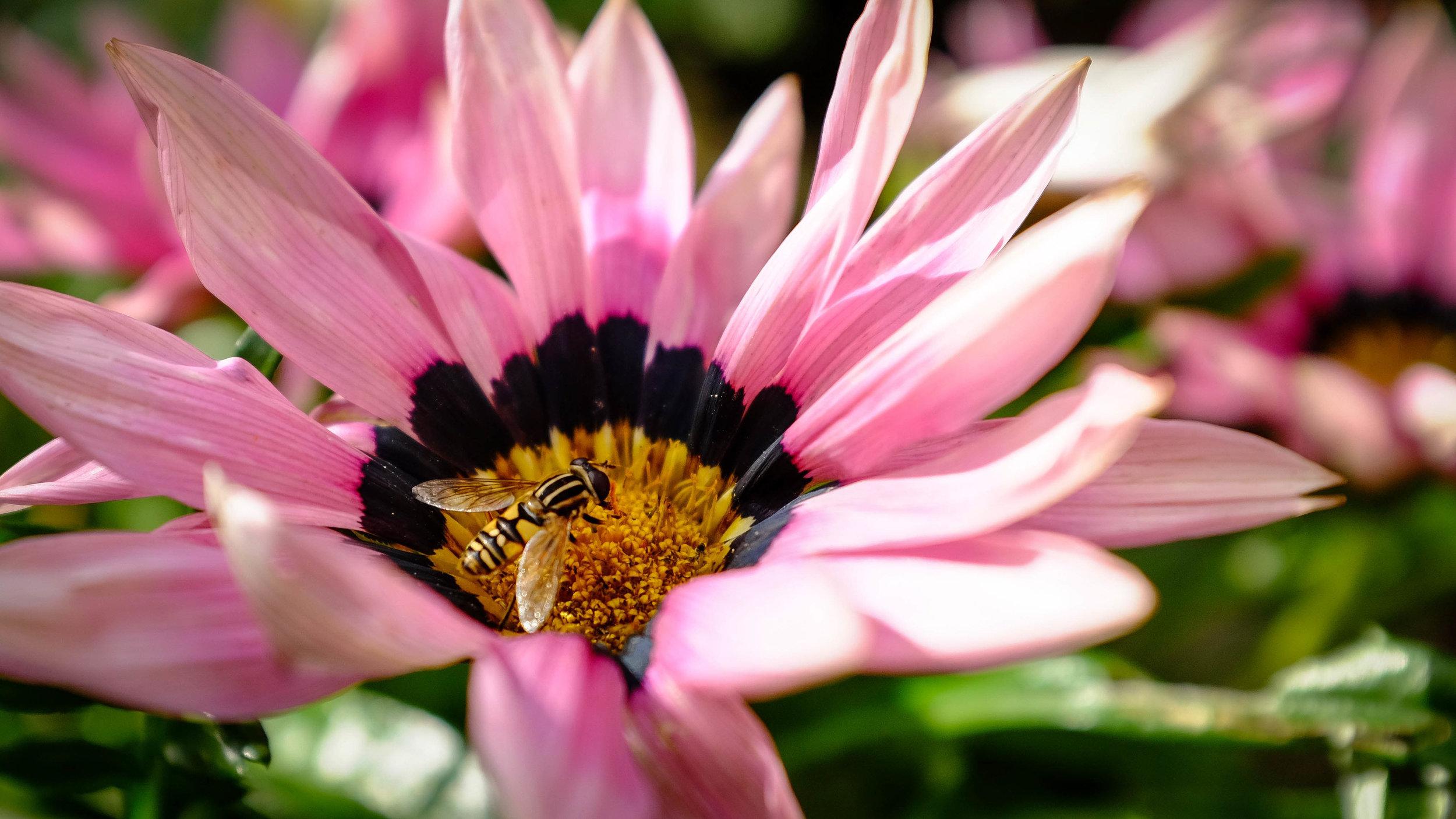 Summer Flys-2.jpg