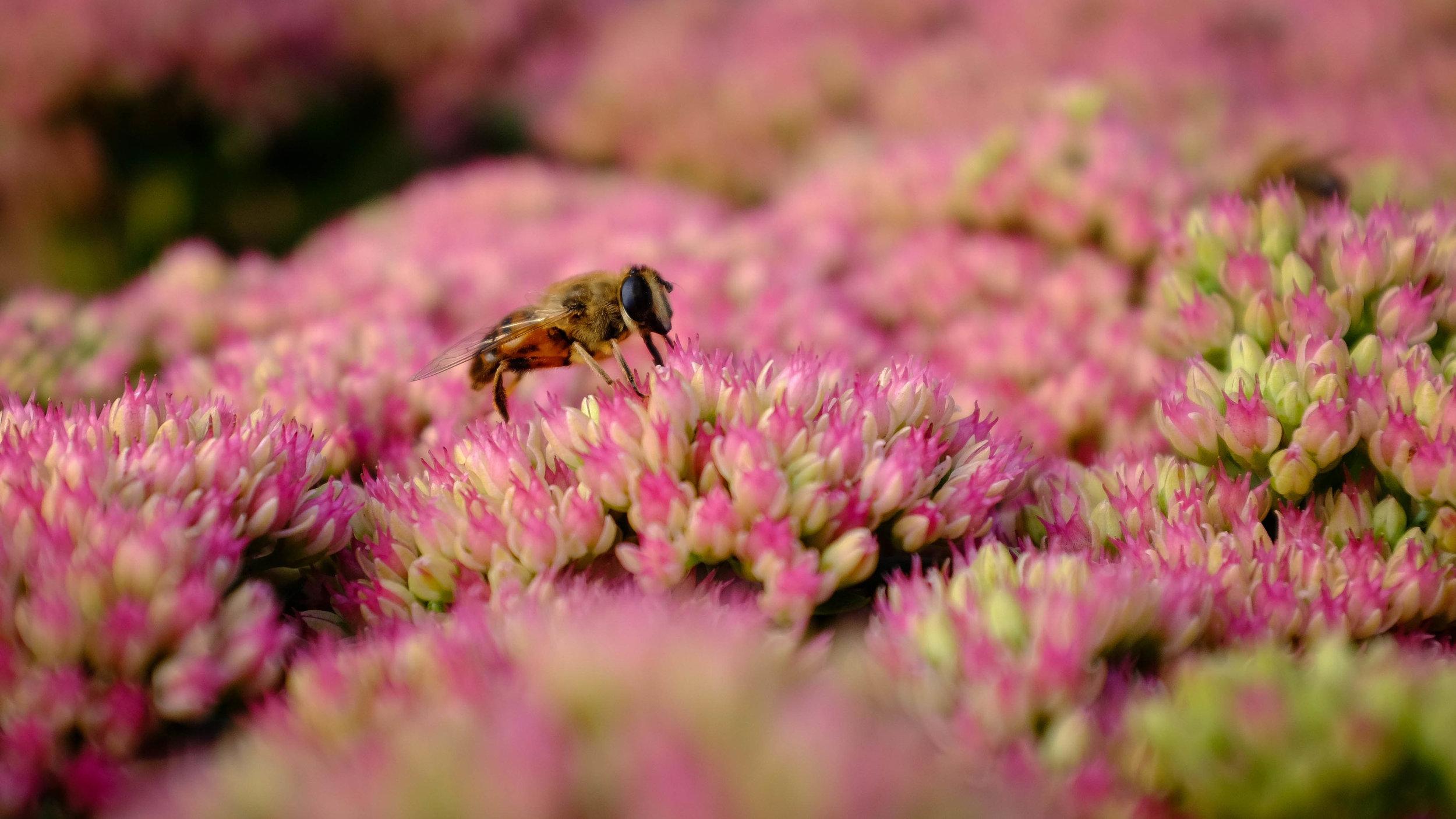 Summer Flys-4.jpg