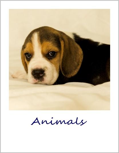 Gallery icon - animals.jpg