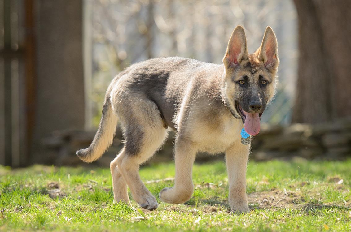 Wrangler, the new pup