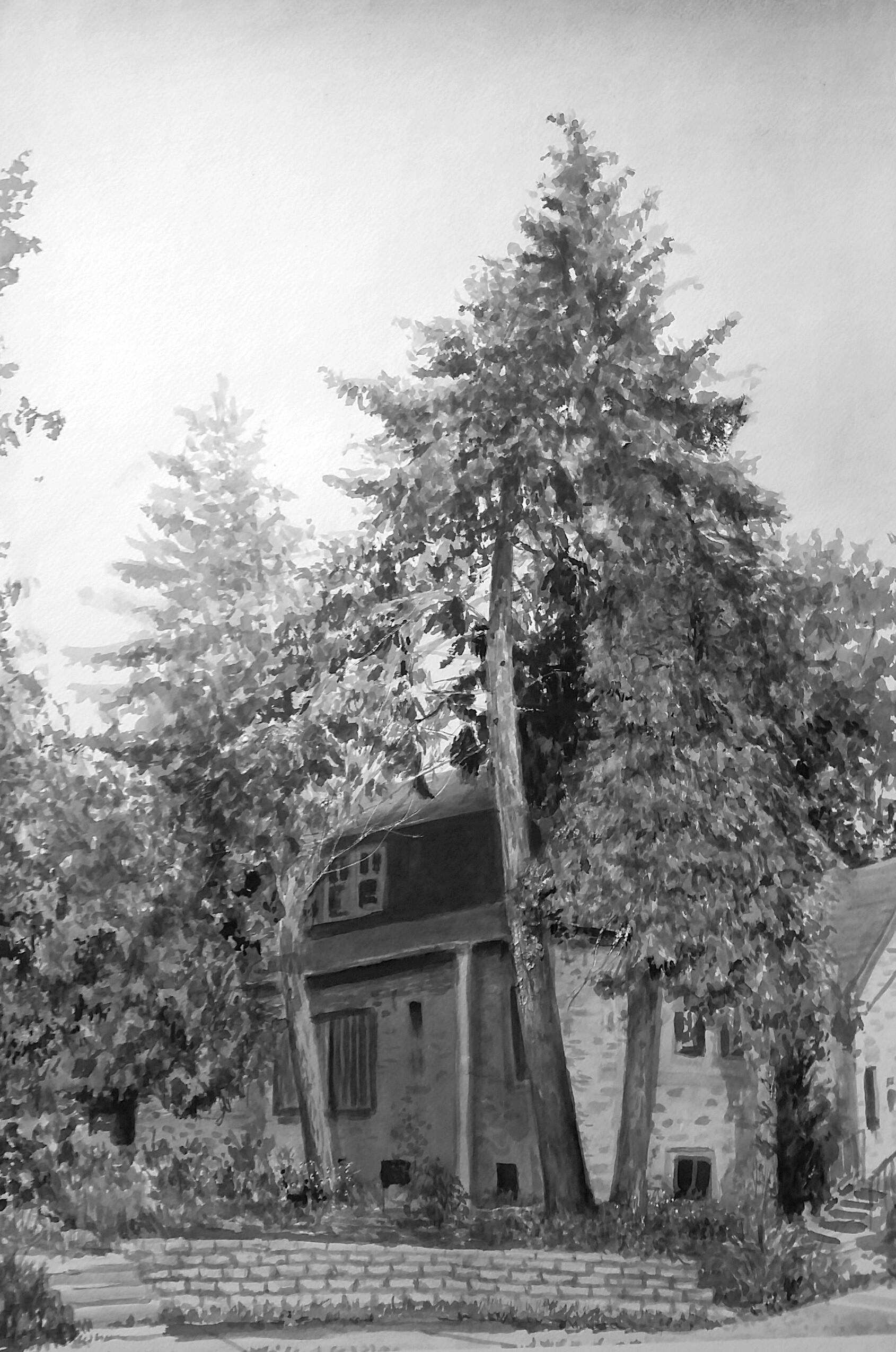 Fratney Street Pine