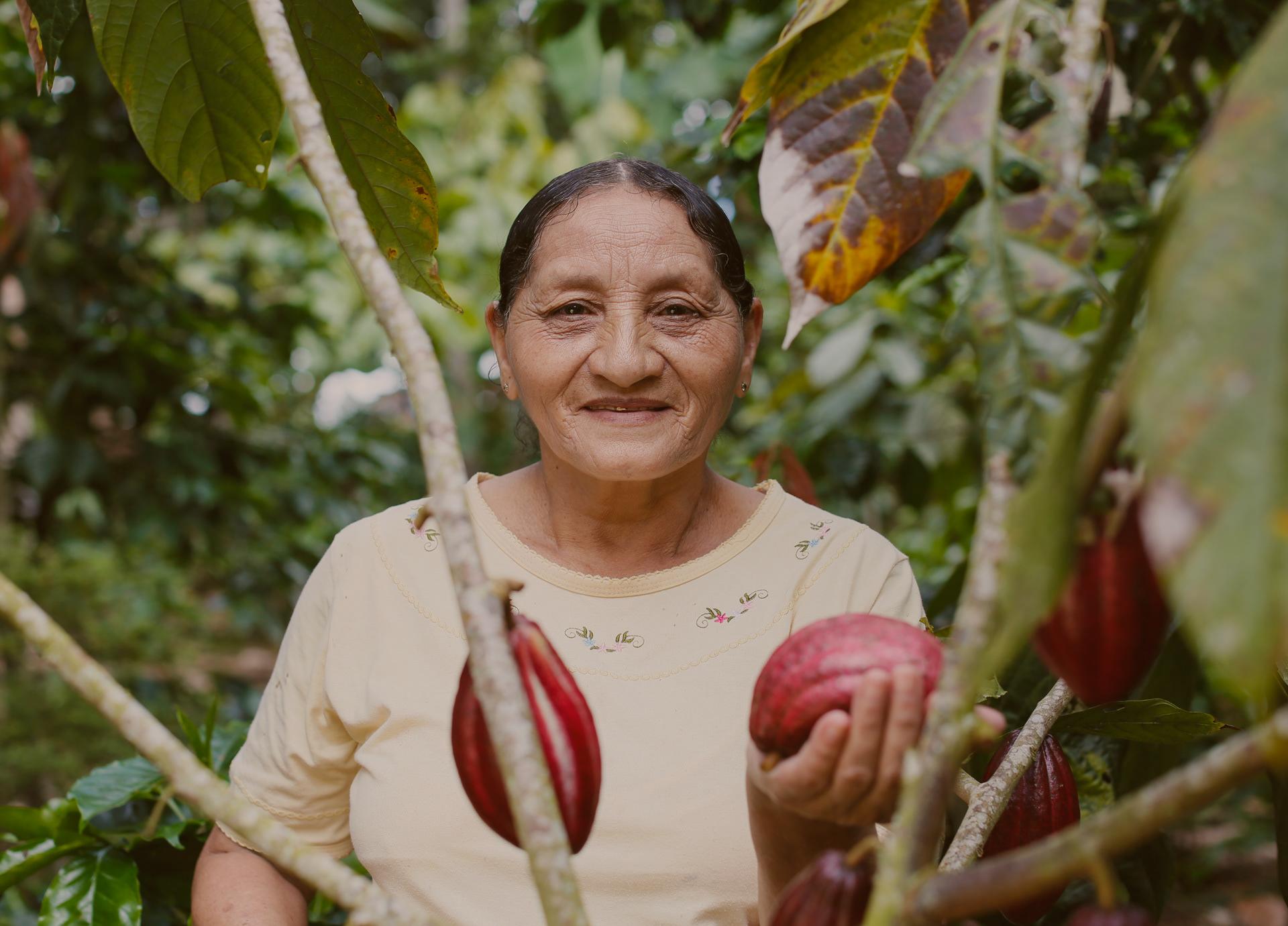 Proyecto de Diversificación con Cacao / World Brand Design Society