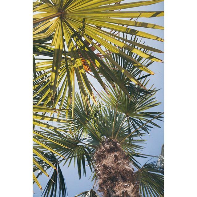 Hatten wir erwähnt, dass wir auch neue Palmen haben? Wir haben neue Palmen. #strandbar #konstanz #bodensee #lakeofconstance #seezeit