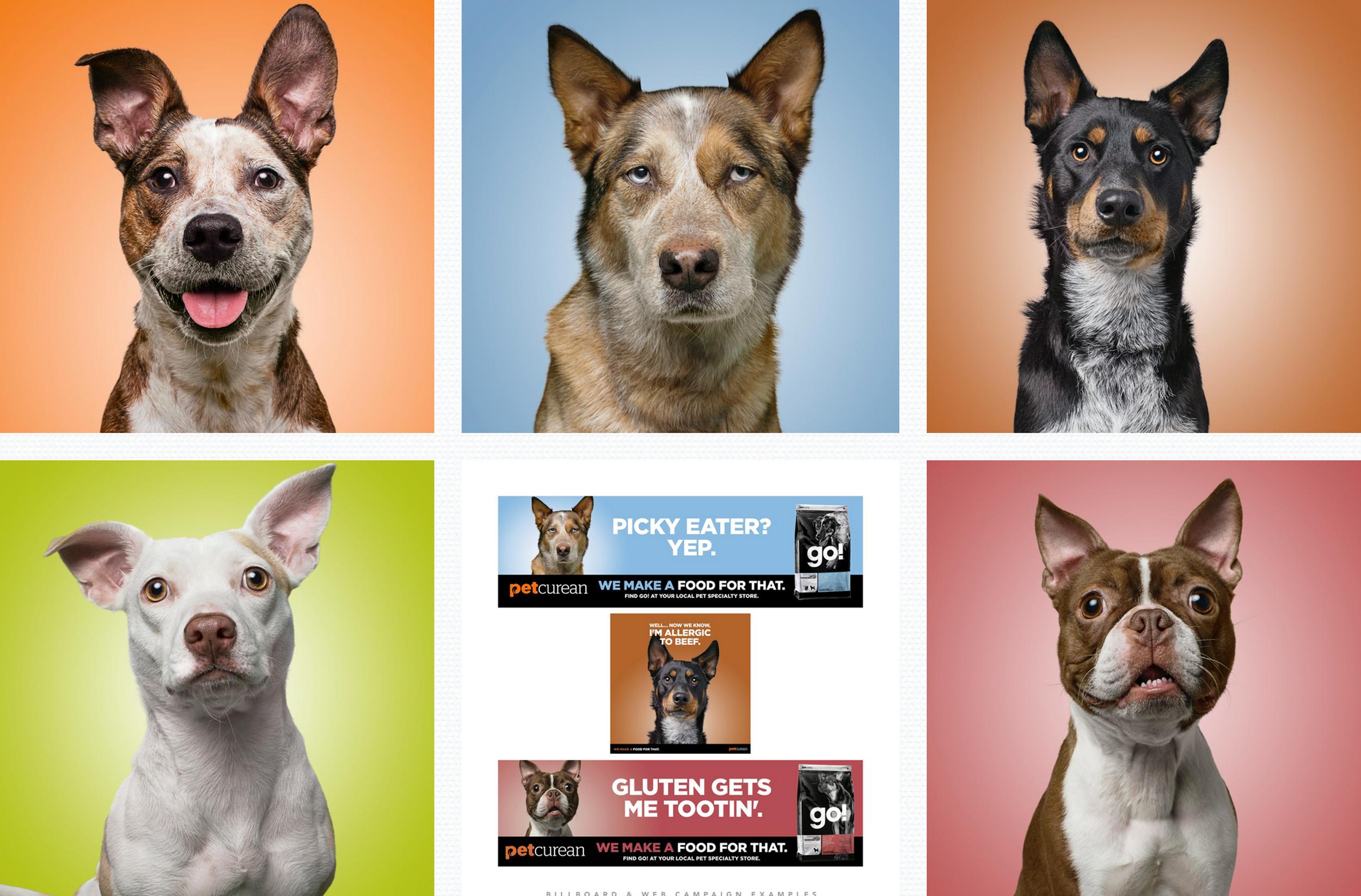 Petcurean-Dogs.jpg
