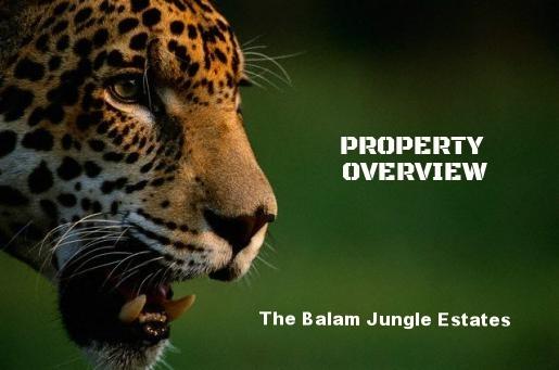 Jaguar Photo1_0.preview.jpg