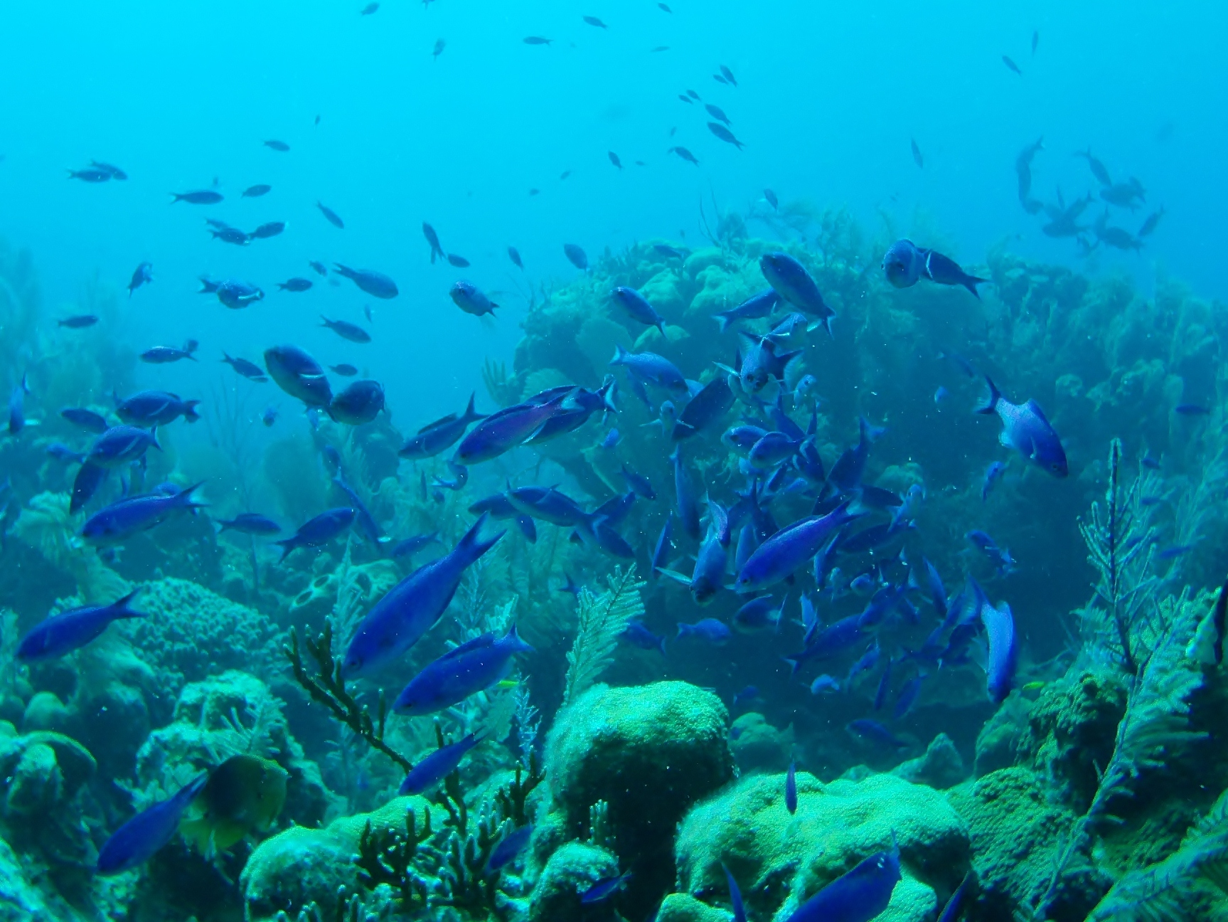 Blue Fish School.JPG