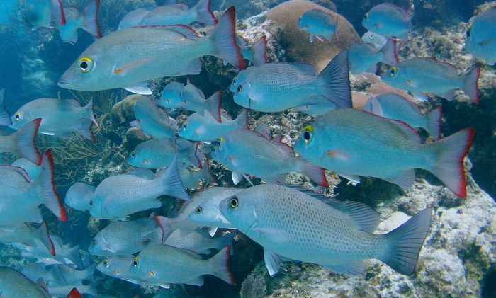 School of Fish 5.JPG