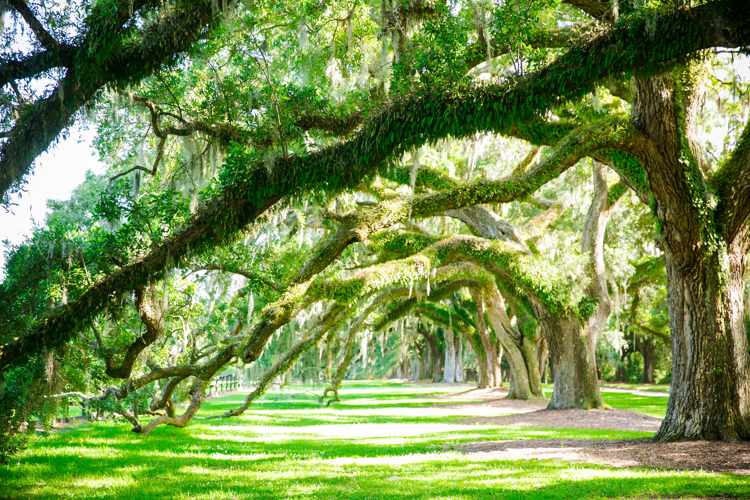 boone-hall-plantation-charleston-wedding-venue