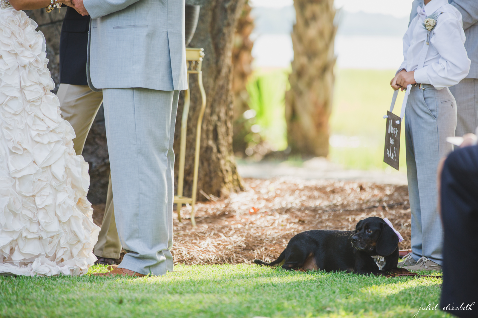 dog-included-in-wedding-ceremony