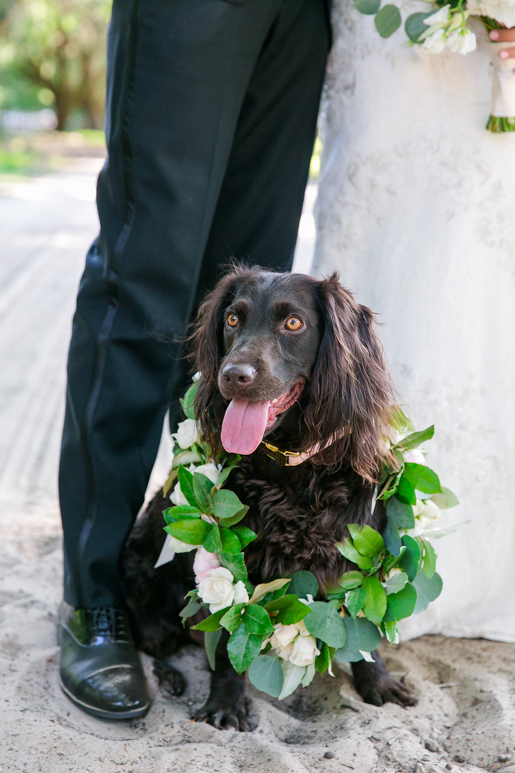 dog-with-floral-wreath-wedding-day
