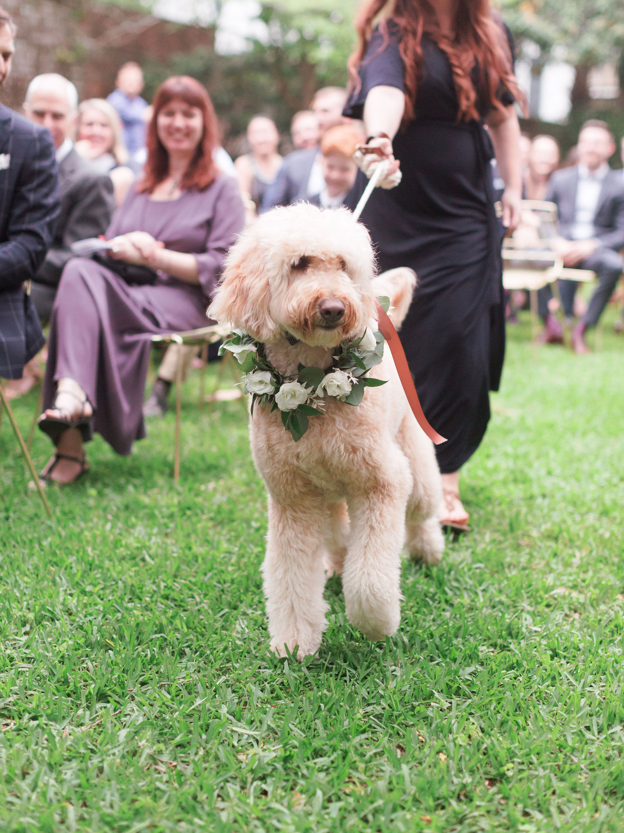 dog-ringbearer
