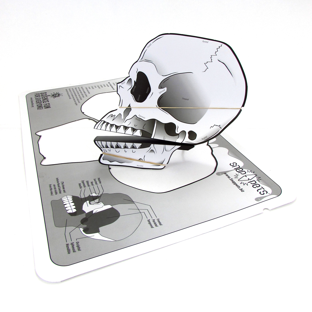 Skull Snappet was created for Science Fun For Everyone. Click to view larger.