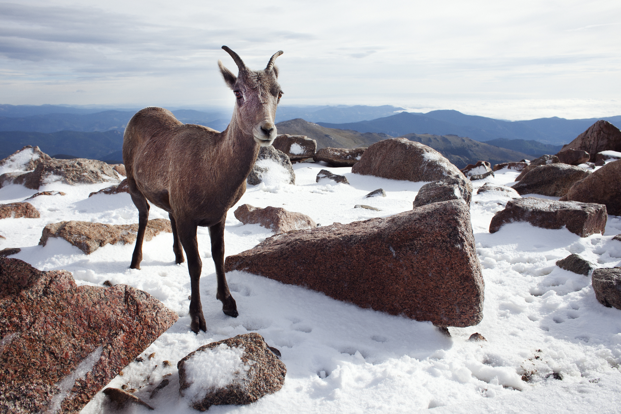 Mt Evans wildlife