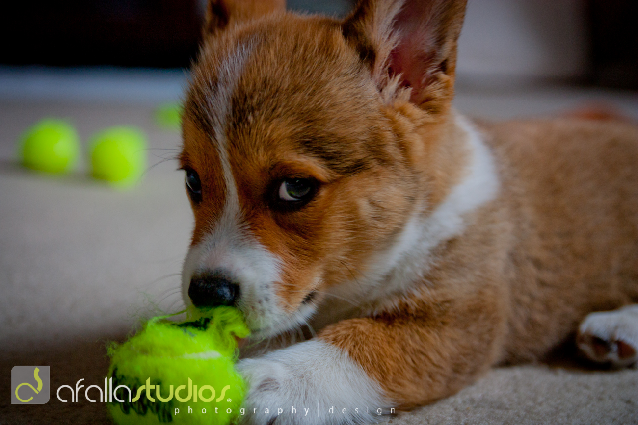 dallas_pet_photography-1-2.jpg