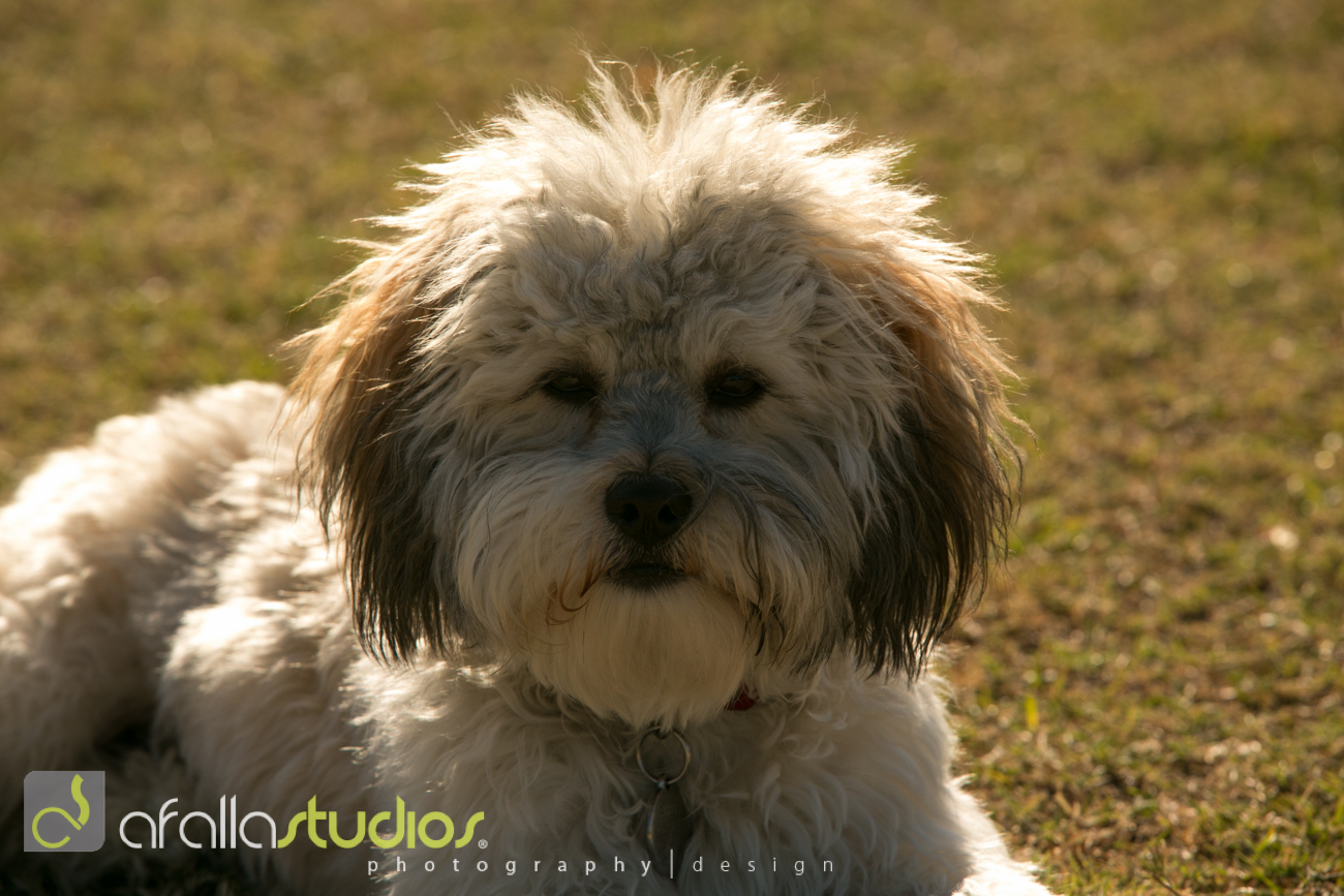 dallas_pet_photography-21.jpg