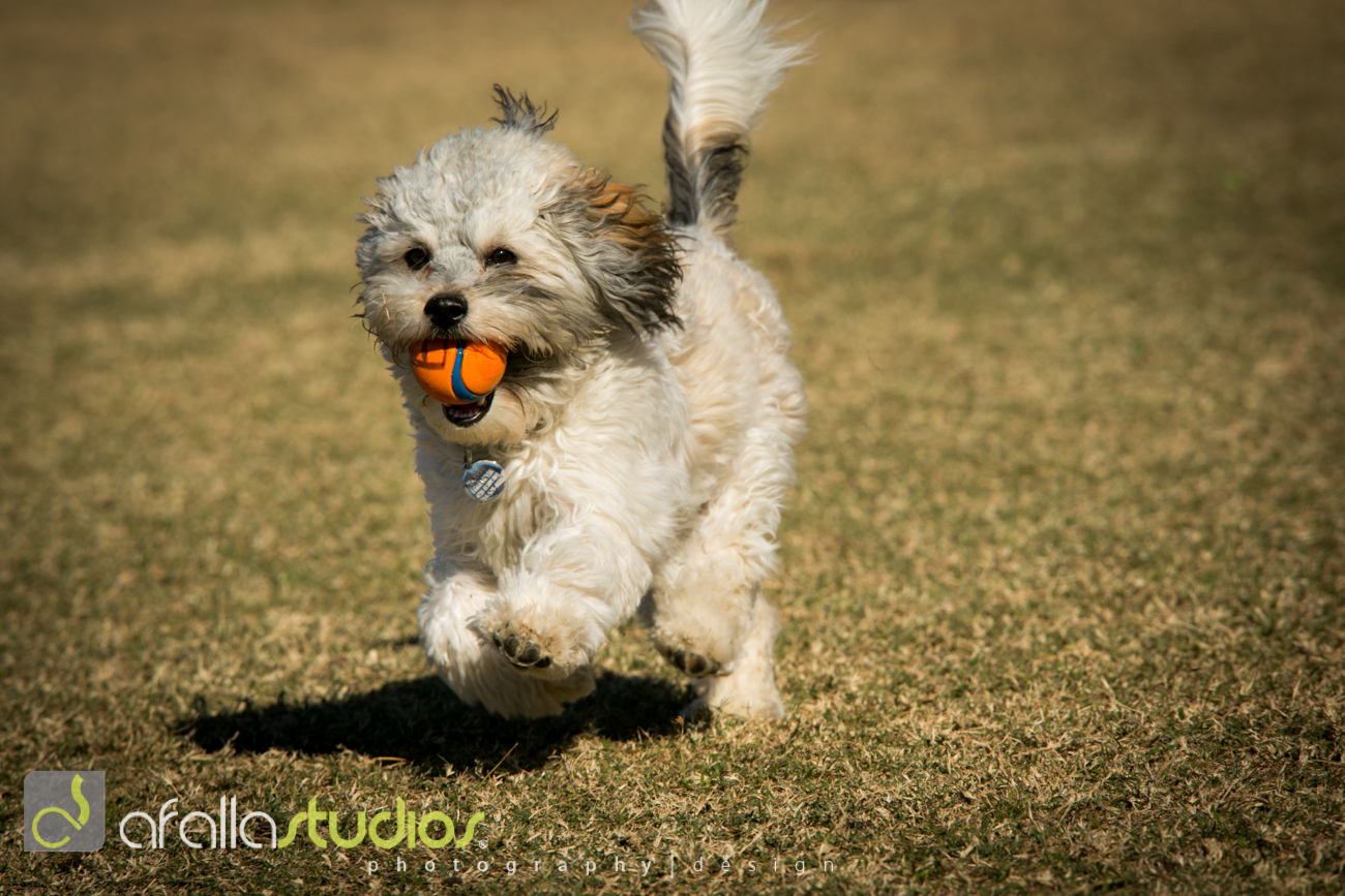 dallas_pet_photography-22.jpg