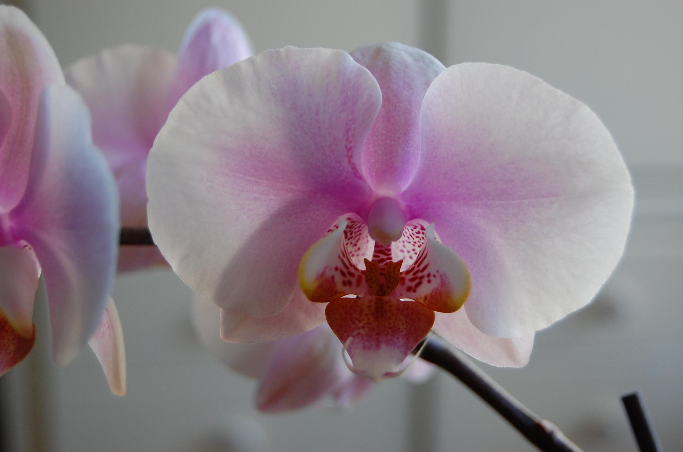 orchid (14).jpg