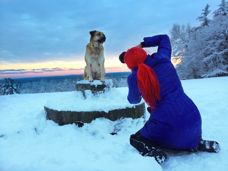 best-dog-photography.jpg
